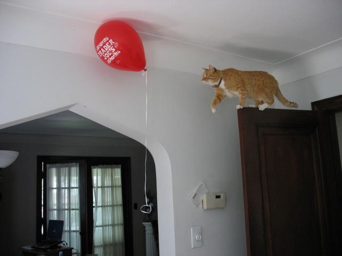 Helium feline